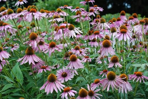 planning an herb garden