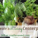 How to Make a Living Centerpiece {Green in 365: Spring}