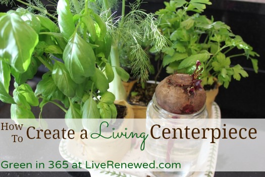 How to Create a Living Centerpiece