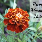 Preventing Mosquitoes Naturally {Green in 365: Outdoors}