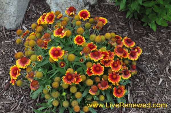 Pops of red and yellow in the flower beds