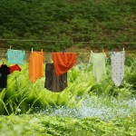 Question of the Day – Natural Laundry
