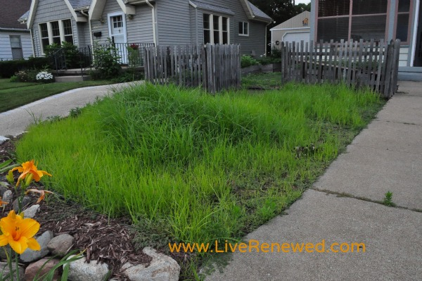 Our overgrown front yard