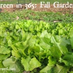 How to Grow a Fall Garden