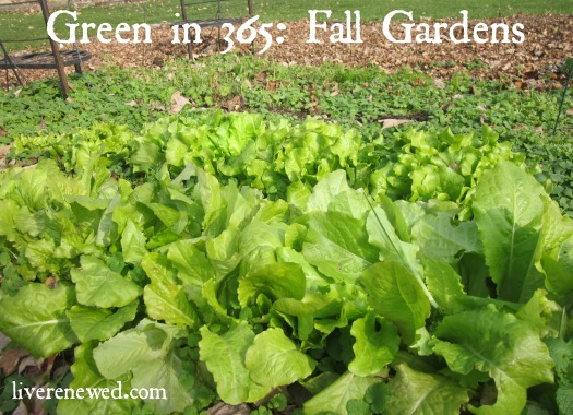 Green in 365: Fall Gardens