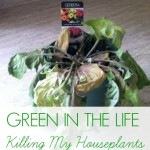 Green in the Life – I Killed a Houseplant {Green in 365}