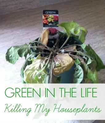 Green in the Life: I killed my first houseplant