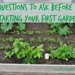 5 Questions To Ask Before Starting Your First Garden