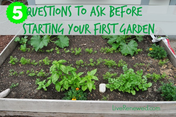 5 Questions to Ask Before Starting Your Fist  Garden at LiveRenewed.com