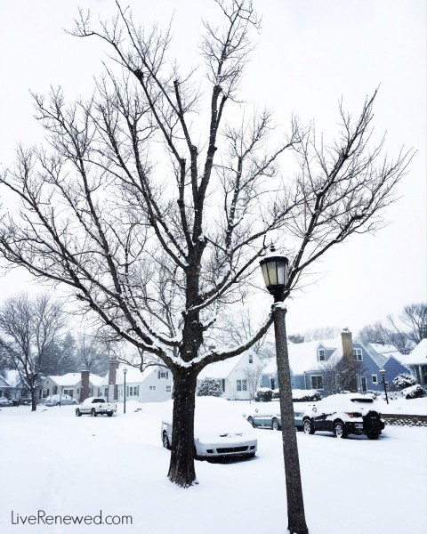 Winter wonderland -- look for the beauty in the midst of the mundane